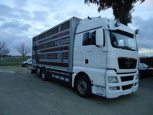 MAN TGX 26 480 livestock truck